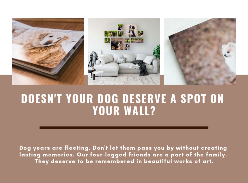Doesn't Your Dog Deserve a spot on your Wall_.png