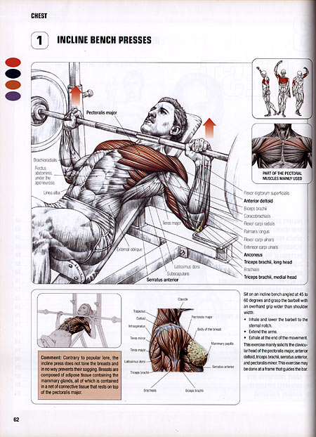 Frédéric Delavier - Strenght Training Anatomy