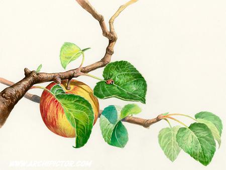 Puutarhan hedelmät - ensipäivän kuori, kuvittaja / illustrator Ossi Hiekkala 2013