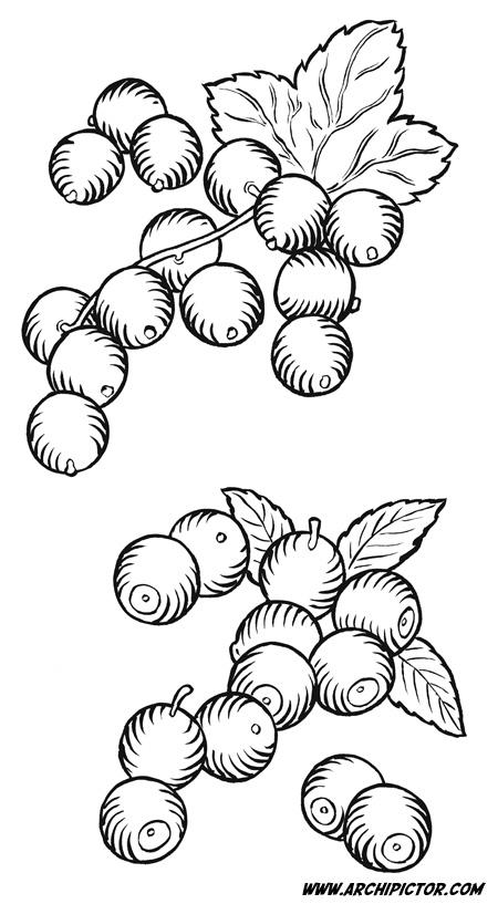 Mustaherukka ja mustikka, kuvittaja / illustrator Ossi Hiekkala 2013