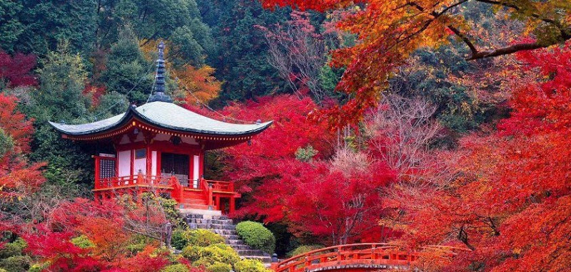 Daigo-ji Temple in Autumn.jpg
