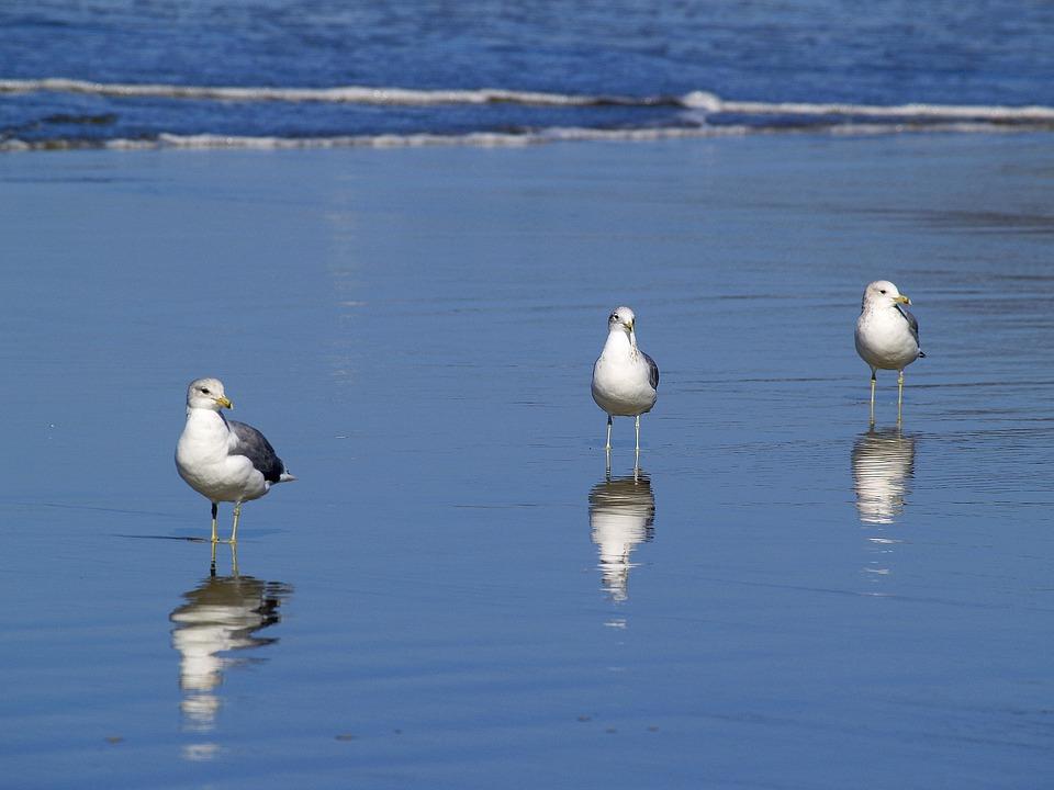 seagulls-51019_960_720.jpg