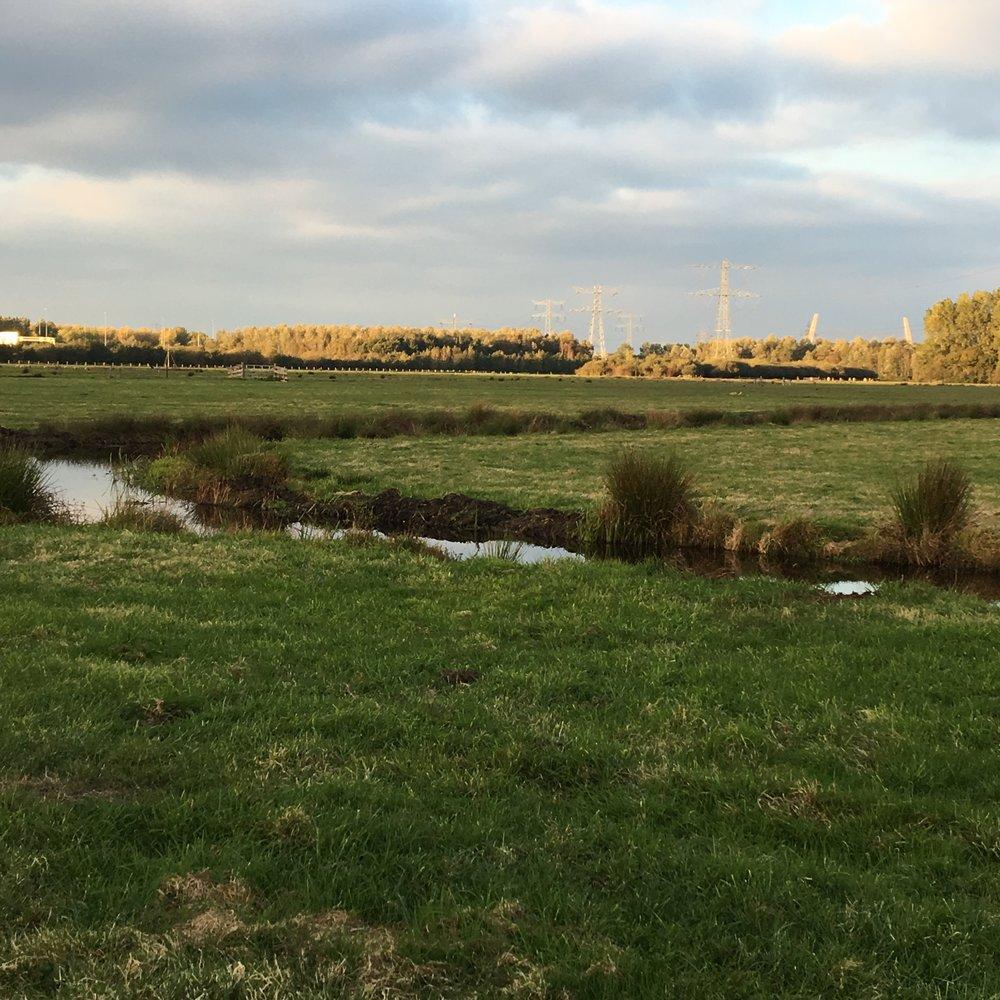 Diemerscheg, een groengebied dat ligt ingeklemd tussen snelwegen en bebouwing.