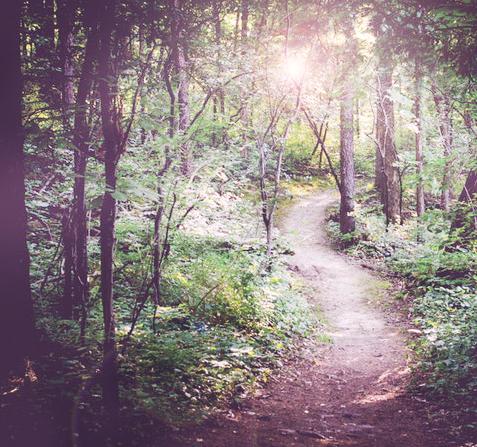 path-spiritual-mentoring-outdoor-forest.jpg