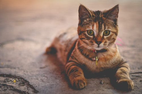 cat 1.jpeg