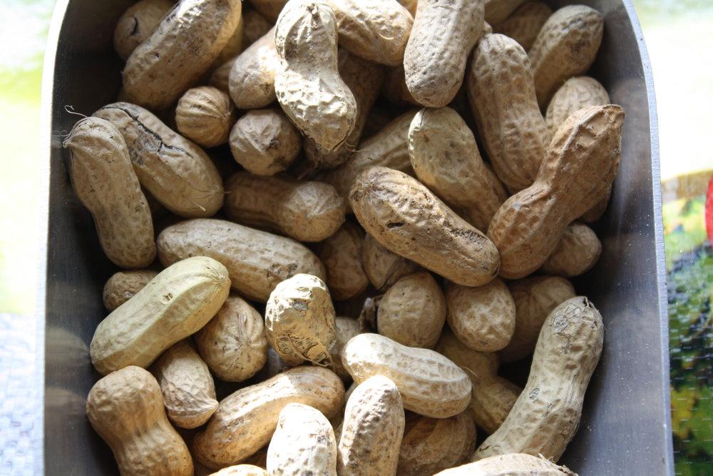 peanutsinshell.JPG
