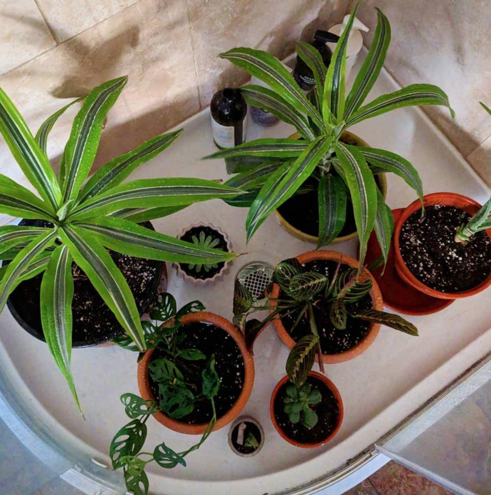 A few of my plant babies having a good soak!