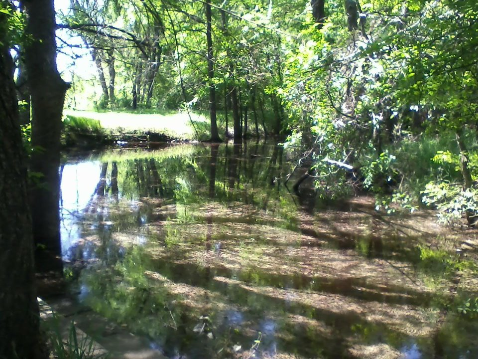 Texas House Creek.jpg