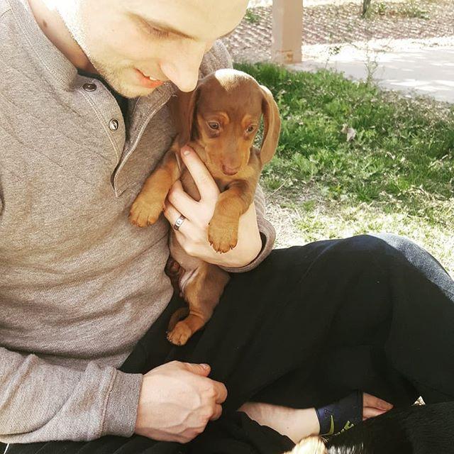 Some pictures of my pups for national puppy day! Kiwi & Kona.  #nationalpuppyday #minidachshund #miniwiener #dappledachshund #blackandred #pups #adogslife #realgymrats