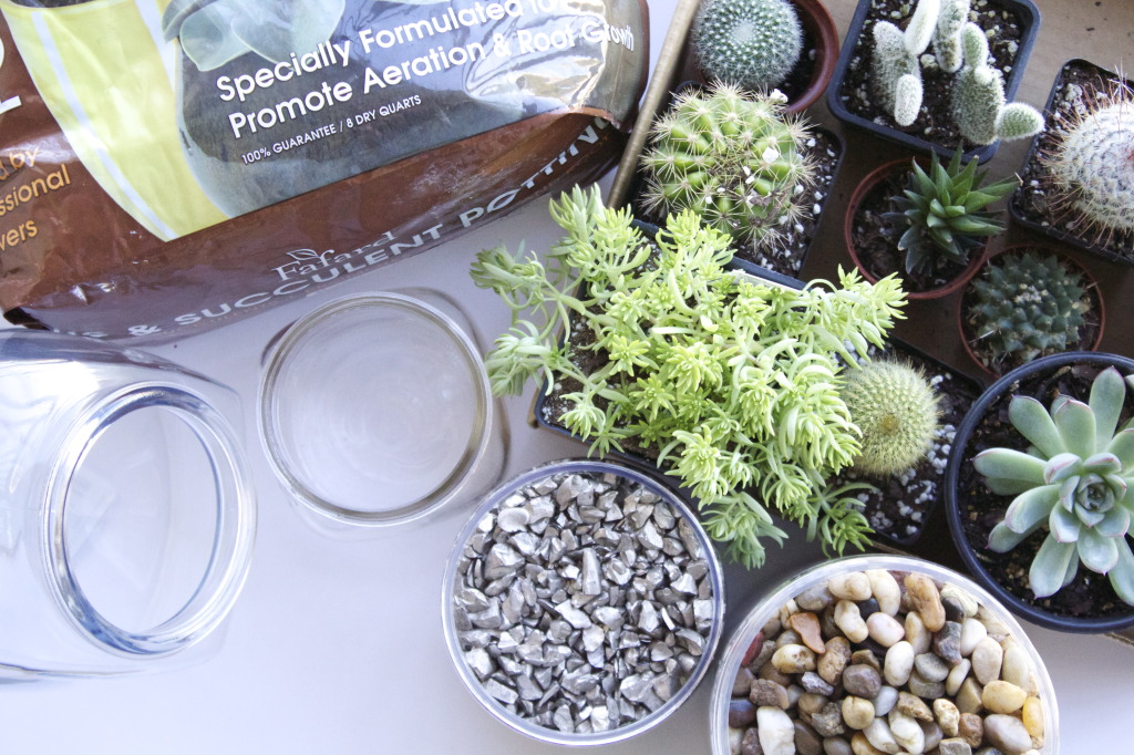 DIY Cacti and Succulent Terrariums | www.annemariemitchell.com