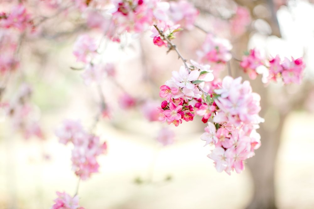 Hayden-Hatch-Lubbock-Senior-Photographer-Spring0021.jpg