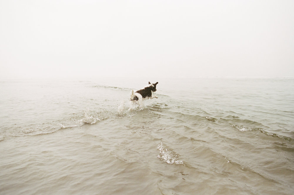 Adventure Pet Photography in Washington State