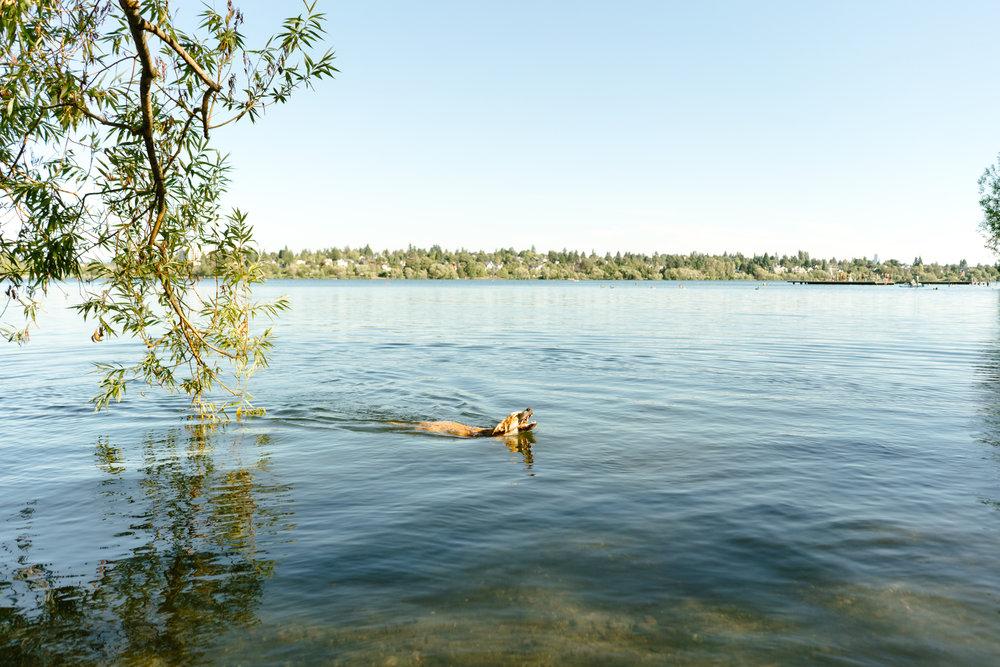 Pet Photography at Green Lake in Seattle, Washington