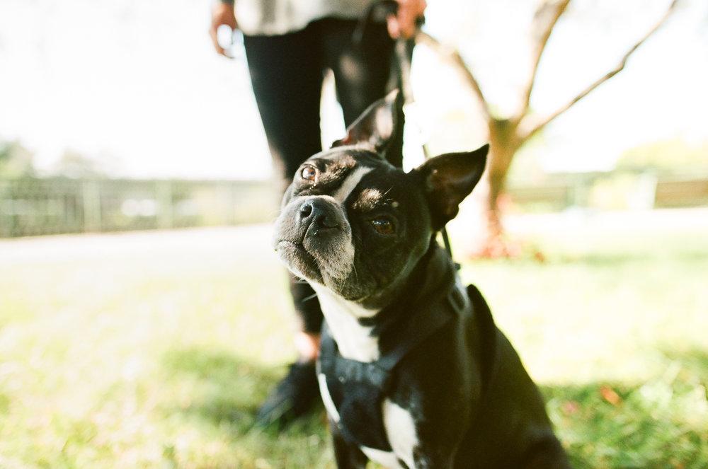 Redmond Pet Photographer