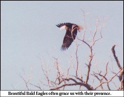 eagle_med_hr.jpeg