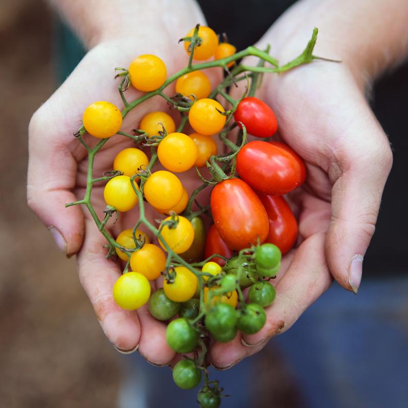 Seed Savers -