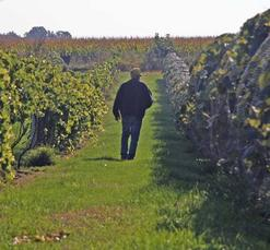 Winneshiek Wildberry Winery -
