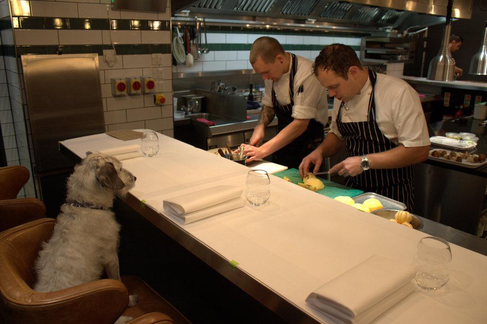 noodle the dog keeps an eye on proceedings