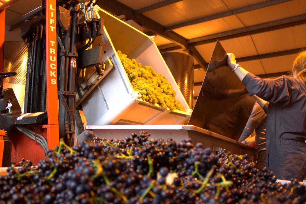grapes, prepare for the crush!