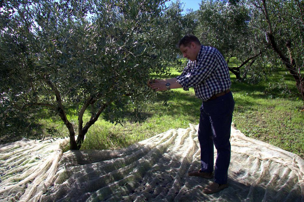 Maurizio Bocchi TACKLES AN OLIVE TREE