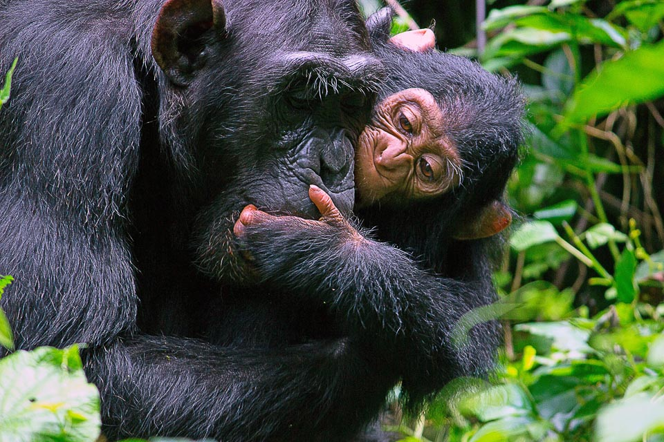 uganda_retreat-18.jpg