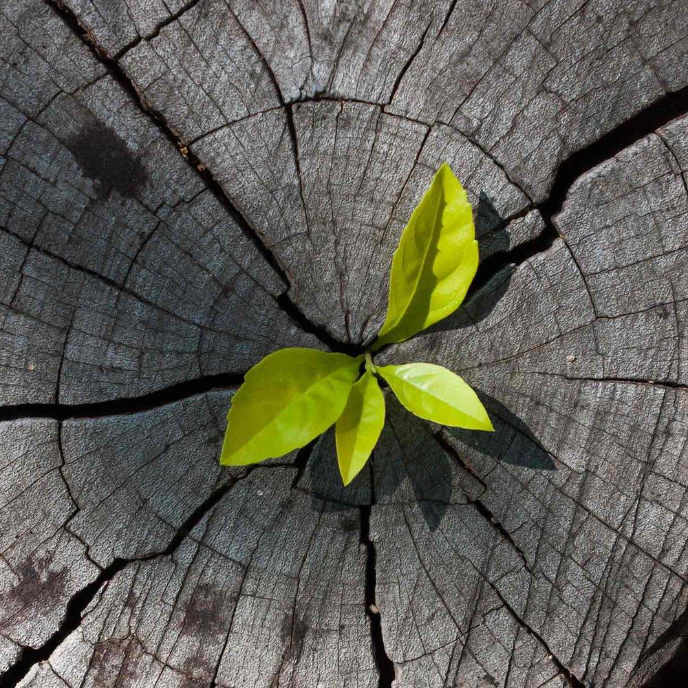 ambitous-growth-agenda_hero_1536x1536-758576565_b.jpg