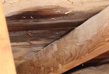 attic-ceiling-leak-palmer-roofing-sonoma-county.jpg
