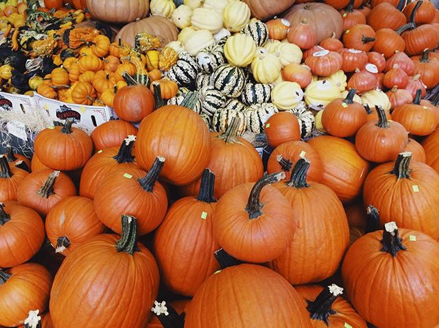 Bien préparer Halloween à la pinède 🎃🤗 #pumpkin #halloween #autumn #myfavoriteseason #marseille #marseillerebelle #guesthouse #ichoosesa #igrmarseille