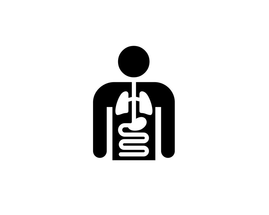 Cartoon Body Organs.png