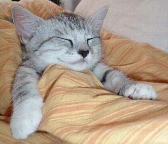 Cozy-Cat (1).jpg