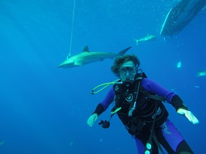 Heike diving with sharks!
