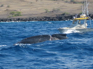 NOAA efforts off our old boat to disentangle a whale