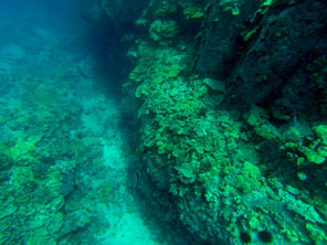 2013_05_09-WG-camera-checks-coral.jpg