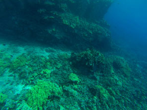 2013_05_09-GoPro-Coral-Reef-(3)_edit.jpg
