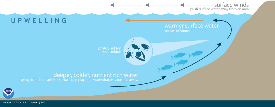 Image 2 . This image from  NOAA  demonstrates the process of upwelling.