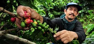 coffee-farmer.jpeg
