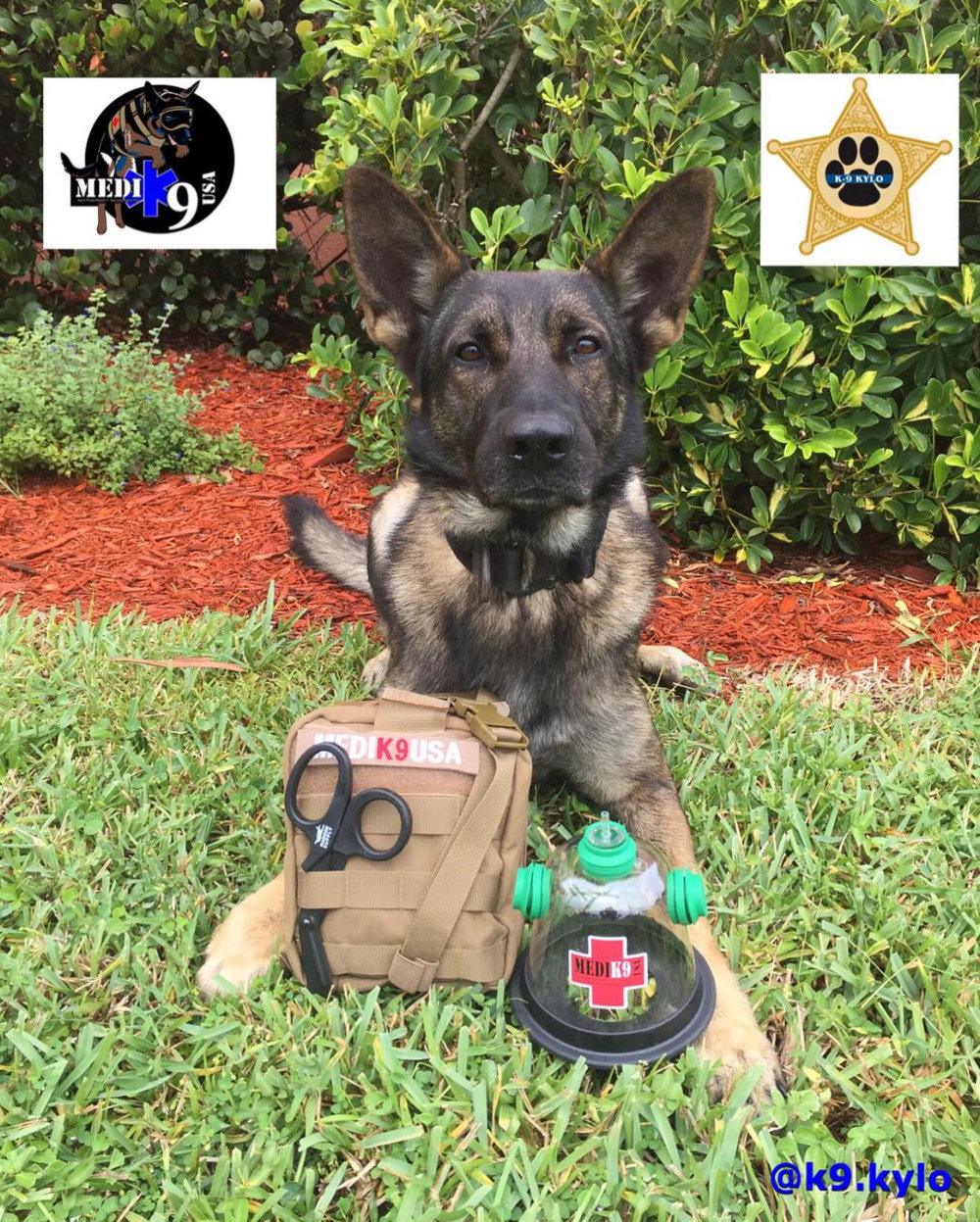 10/2/18 - K9 Kylo of the Lee County Sheriff's Office, Fl
