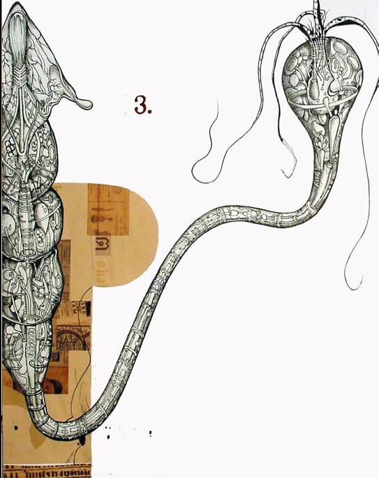Flagellate Plasmodium ET.20
