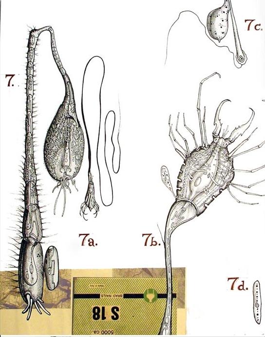 Ciliata P32 + Crab Hydraphage v.5