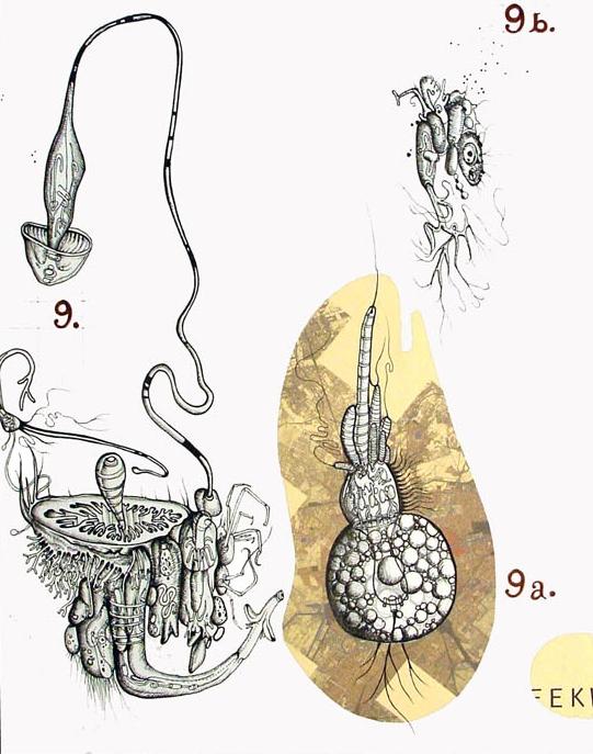 Fungal + Spore Macrobacterium B-2a
