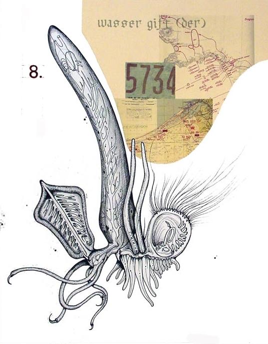 Molluscal Macrophage