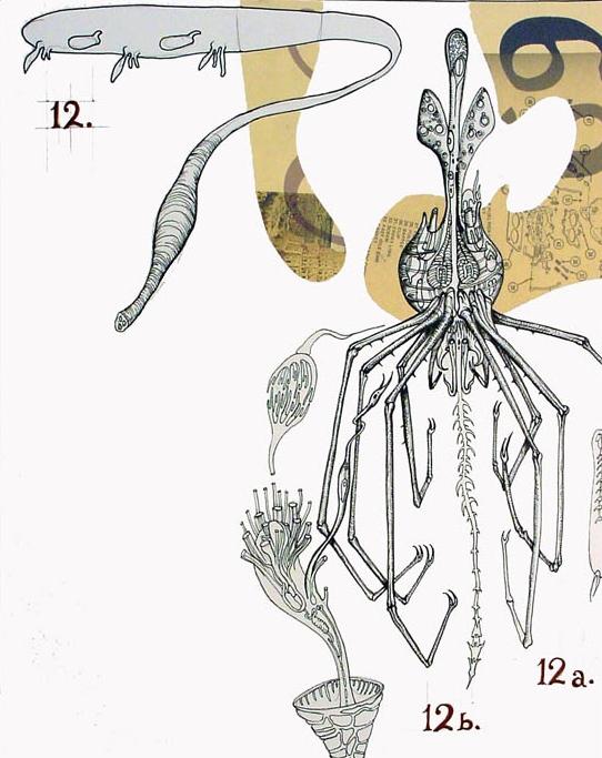 Mucosa Leech Americanus + Crested Mantis Phage