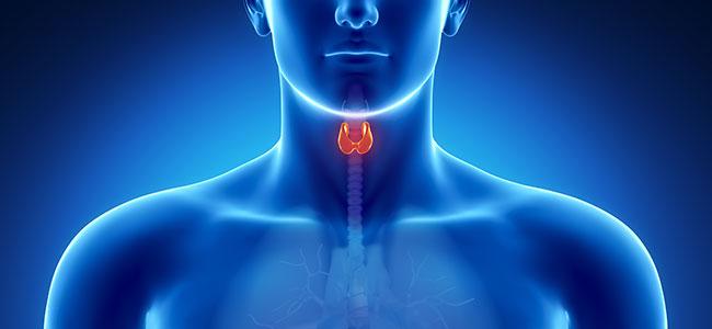 thyroid-ebook.jpg