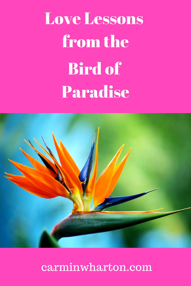 Love Lessons from the Bird of Paradise.png