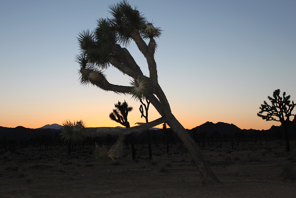 Sunset in Joshua Tree, California