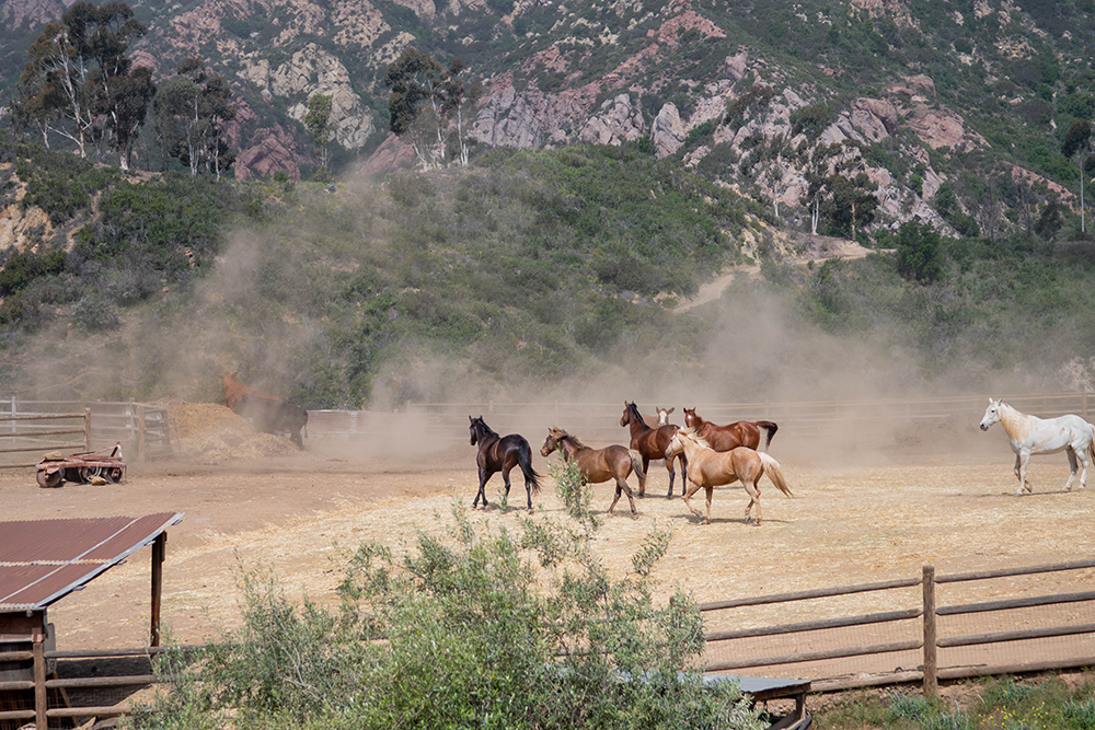 Horses at One Gun Ranch.
