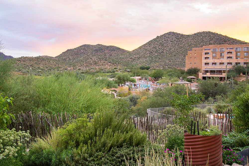 Garden View of the JW Marriott Tucson Starr Pass Resort & Spa.
