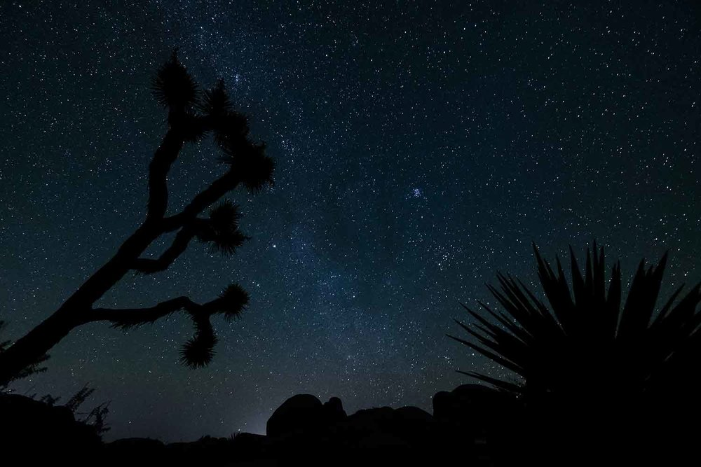 A night sky filled with stars in Joshua Tree National Park.