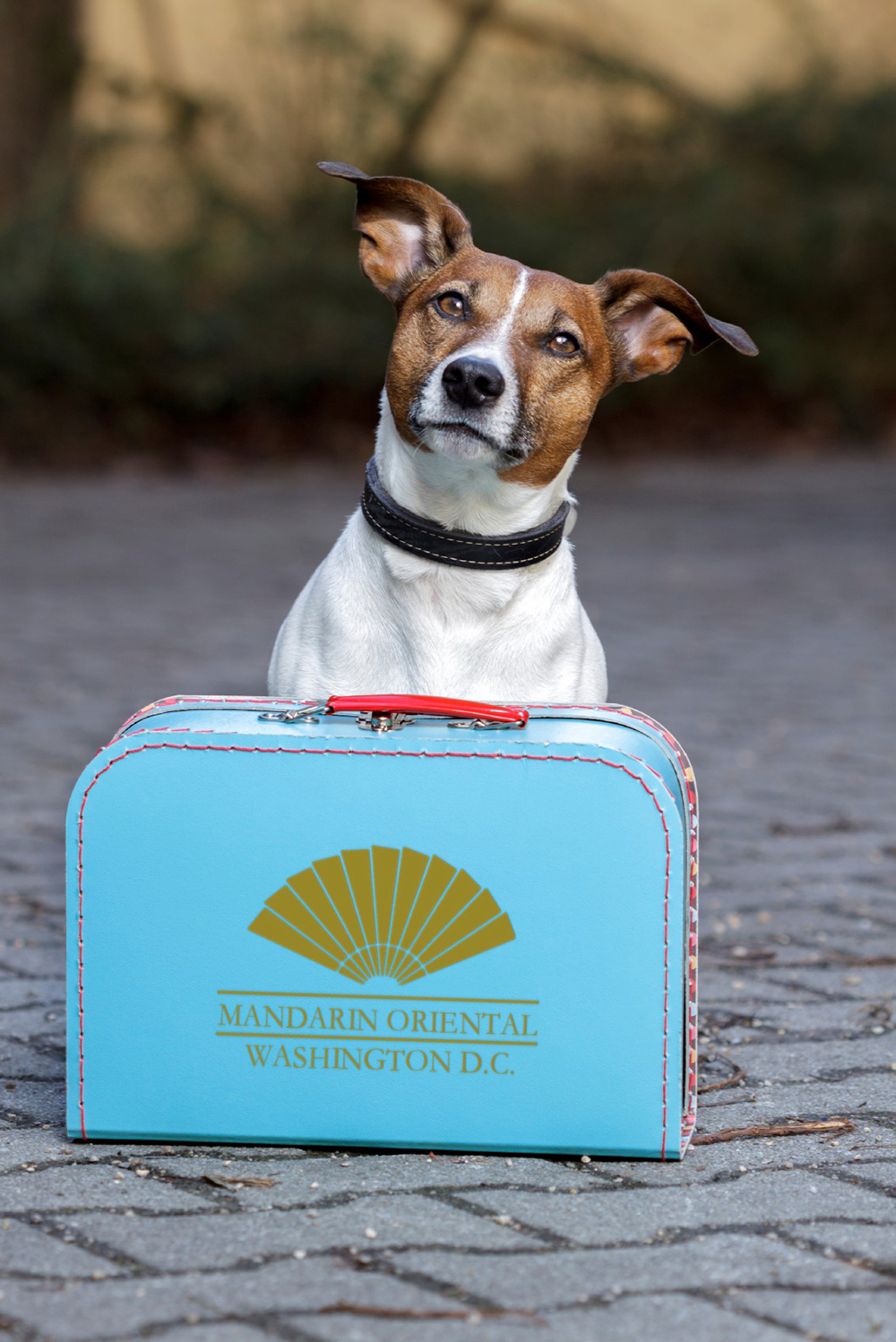 During the Chinese Lunar Year of the Earth Dog, Mandarin Oriental, Washington DC is treating four-legged guests and their owners to exclusive luxury experiences.