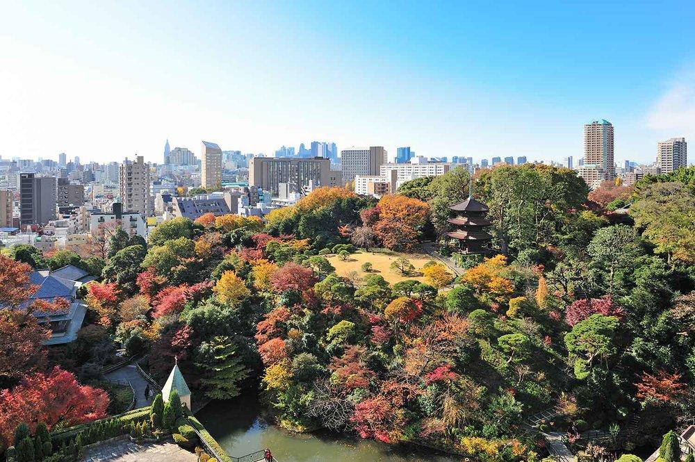 Garden_AutumnLeaves.jpg